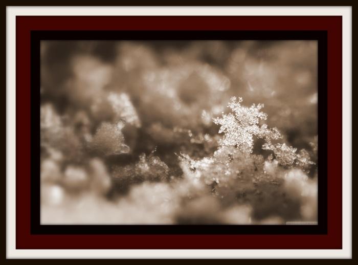 Website cover snow