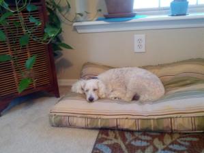 Sophia Dog